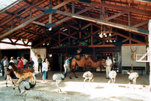 Safari's Farm